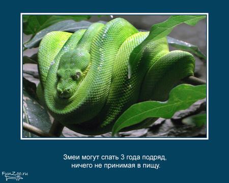 Животные иинтересные факты оних. Изображение № 13.