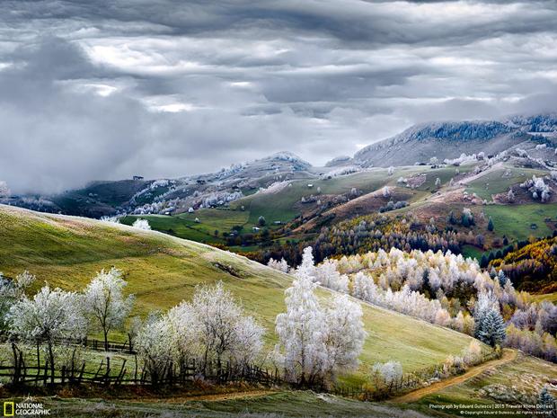 Изморозь на деревьях у деревни Пестера (Румыния) / Автор: Eduard Gutescu. Изображение № 5.