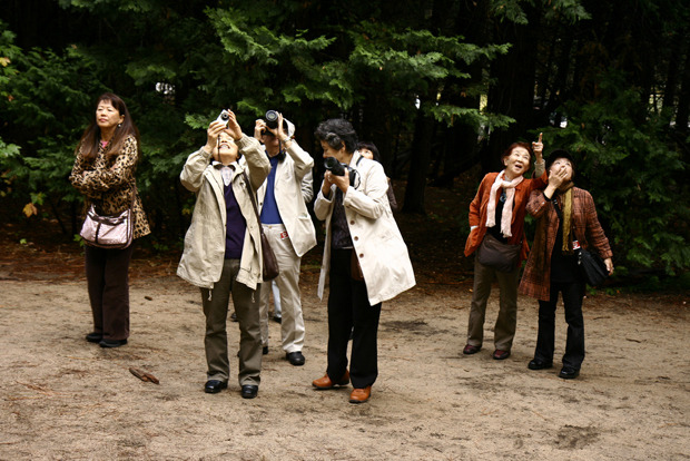 Японские туристы по всему миру. Изображение № 3.