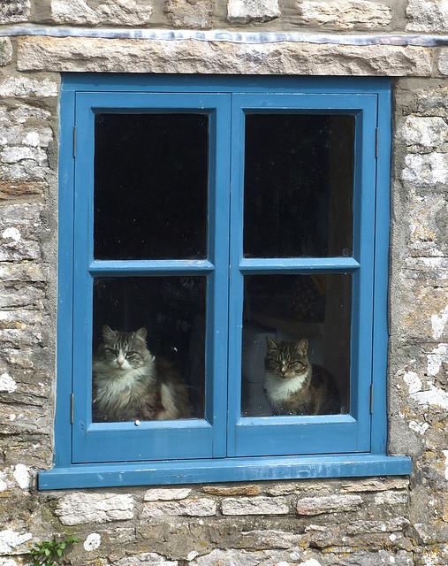 Cat. Window. Изображение № 19.