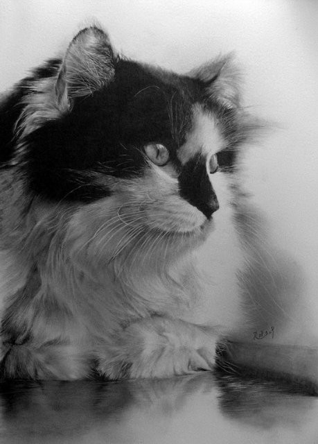 Кошки, люди, карандаш. Paul Lung. Изображение № 17.