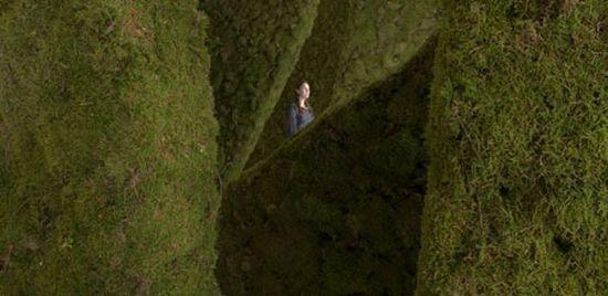 Диалог с природой: вертикальные сады. Изображение № 30.