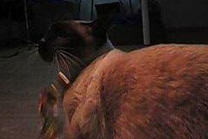 Как сделать фотобудку  для кота. Изображение № 24.
