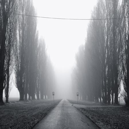 Туманные фотографии. Изображение № 14.