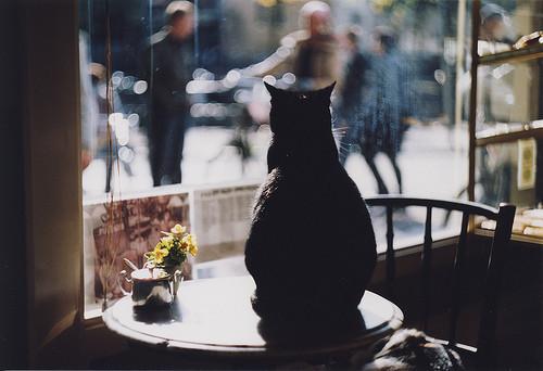 Flickr-галереи. Изображение № 53.