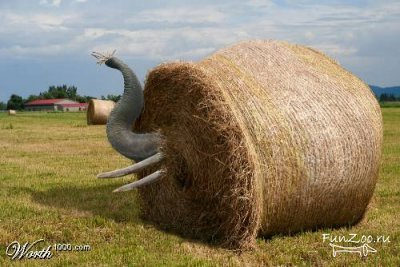 Какспрятать слона. Изображение № 12.