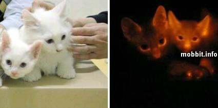 Светящиеся коты. Изображение № 2.