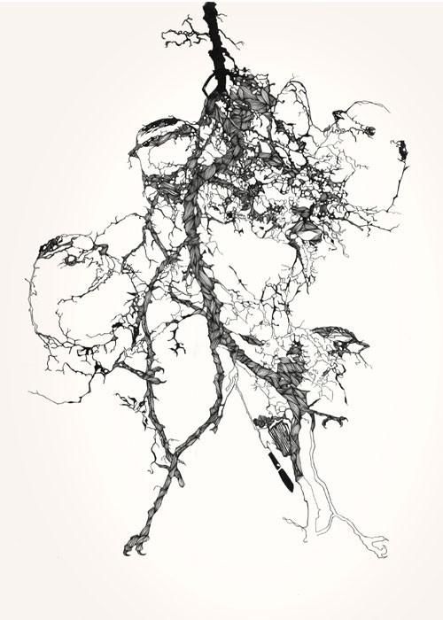 Birds Of Claire. Изображение № 9.
