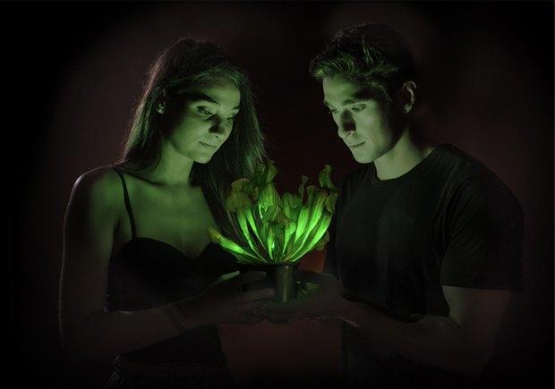 Создано первое в мире светящееся в темноте растение. Изображение № 1.