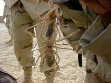5 нашумевших «мистификаций» – феи, пауки, йети. Изображение № 3.