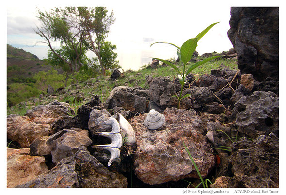 Восточный Тимор. Изображение № 18.
