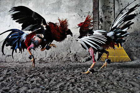 Jan Sochor photo essays. Изображение № 5.