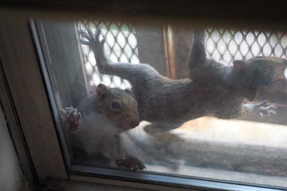 Белка в нашем окне. Изображение № 24.