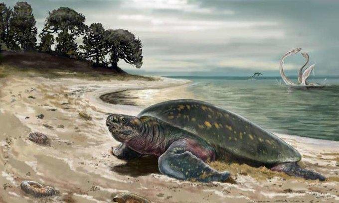 Найдены останки самой древней морской черепахи . Изображение № 2.