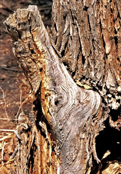 Treefilia. Изображение № 23.