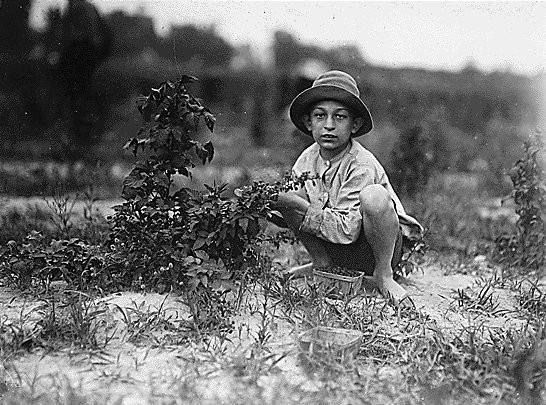 Эксплуатации детского труда в Америке (1910 год).И эмигранты США. Изображение № 18.