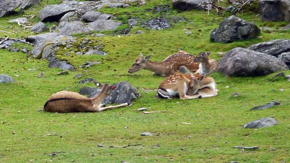 Большая резервация с оленями. Ближе. Изображение № 2.