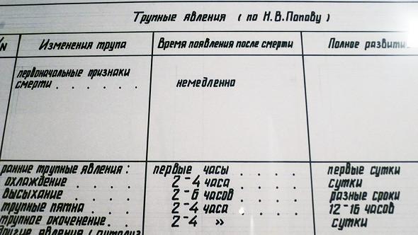 Параллельные миры: Спецпроекты 4-й Московской биеннале. Изображение № 35.