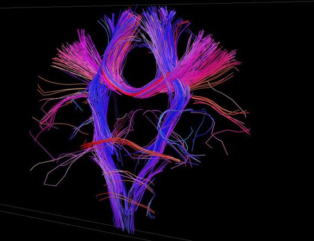 База данных: Как превратить информацию в искусство. Изображение № 4.