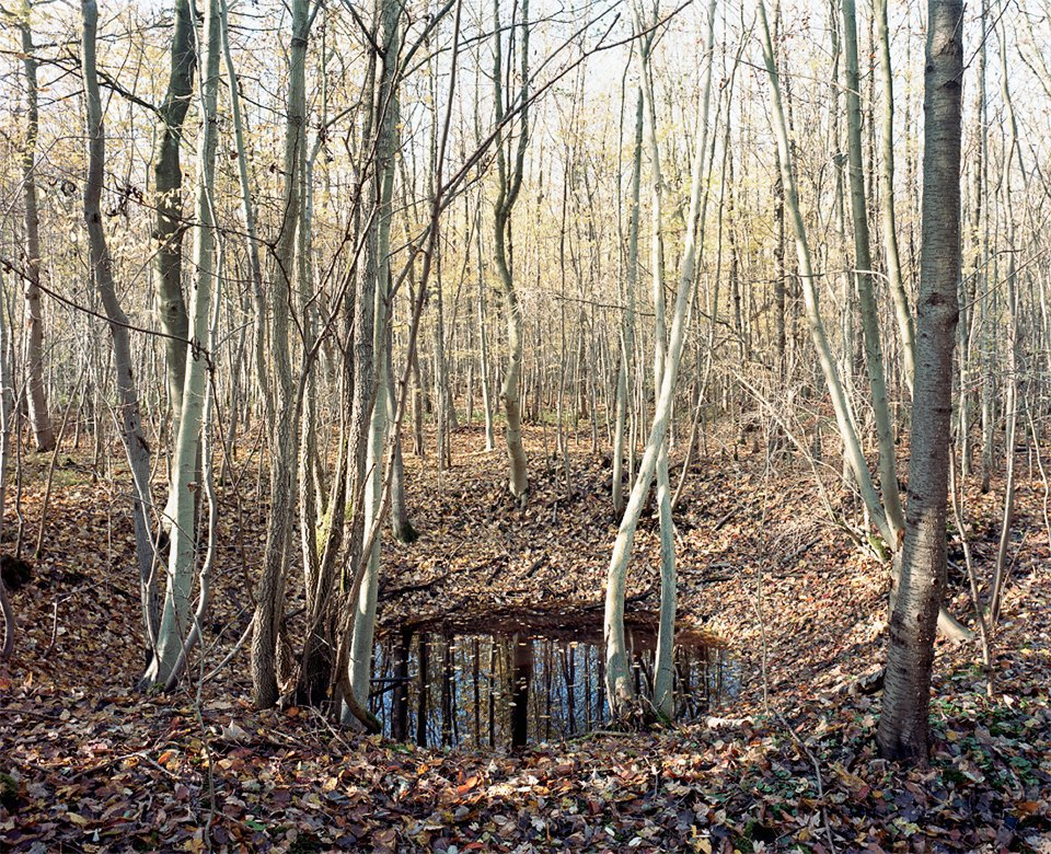Галерея: как война изменила леса Германии. Изображение № 8.