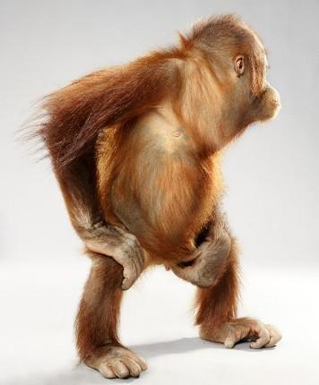 """Jill Greenberg """"Monkey portraits"""". Изображение № 59."""