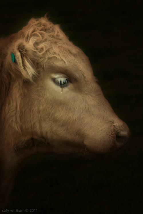 Келли Уитэм: красота по-новозеландски. Изображение № 3.
