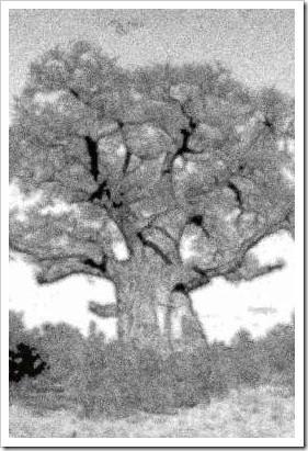 Iamamiwhoami – выносящий мозг проект. Изображение № 3.