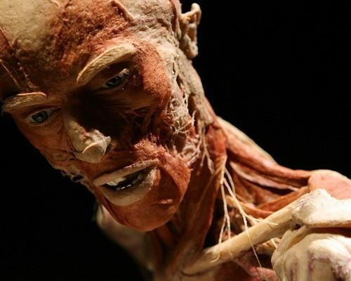 Скандальная выставка анатома Гюнтера ФонХагенса. Изображение № 10.