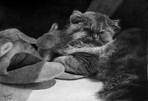 Paullung.и его коты. Изображение № 11.