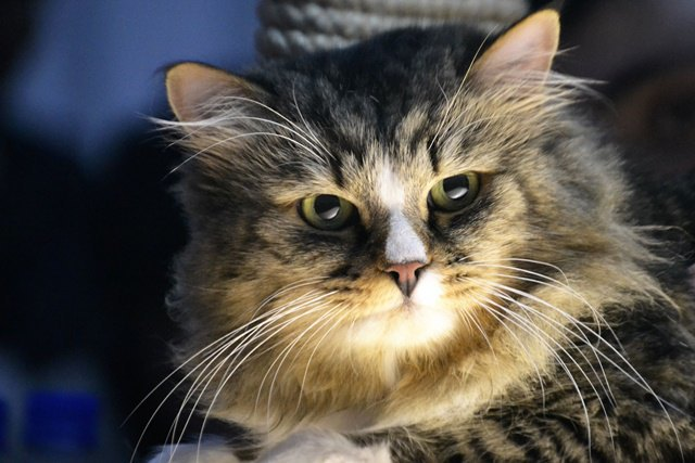Исследование: владельцы кошек умнее владельцев собак. Изображение № 1.