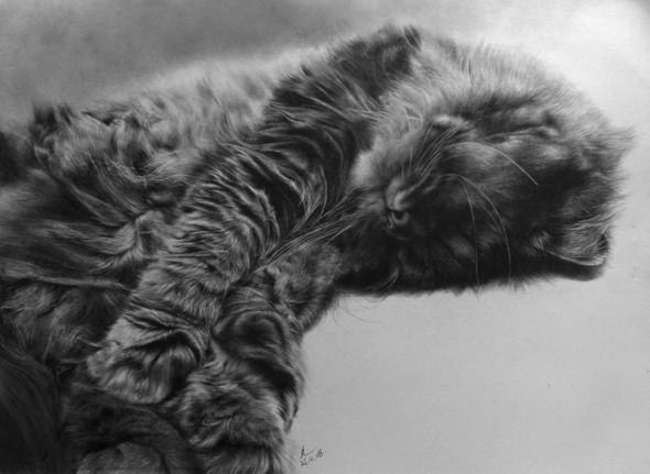 Paullung.и его коты. Изображение № 7.