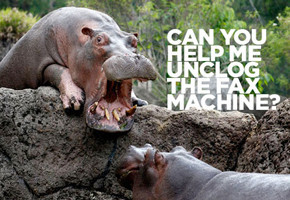 В мире животных: Герои «Мадагаскара» в мемах, рекламе и видеороликах. Изображение № 19.