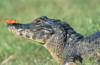 Exotic animals!. Изображение № 4.