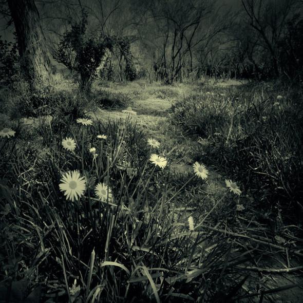Загадочно-прекрасный мир болгарской фотохудожницы Магдалены Ванли. Изображение № 3.