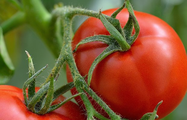 Органические продукты полезнее обычных?. Изображение № 3.
