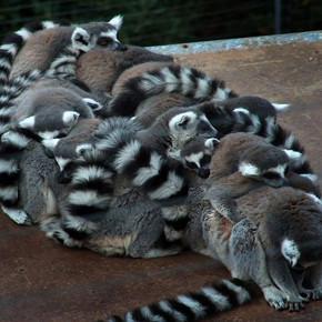 В мире животных: Герои «Мадагаскара» в мемах, рекламе и видеороликах. Изображение № 87.