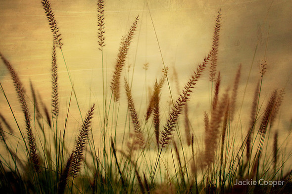 Фотограф Jackie Cooper. Изображение № 33.