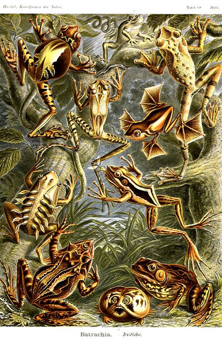 Причудливые формы природы. Изображение № 54.