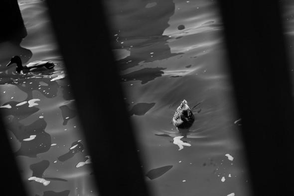 Черно-белые путешествия. Изображение № 56.