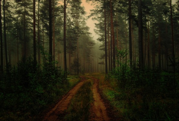 My wonderland. Изображение № 10.