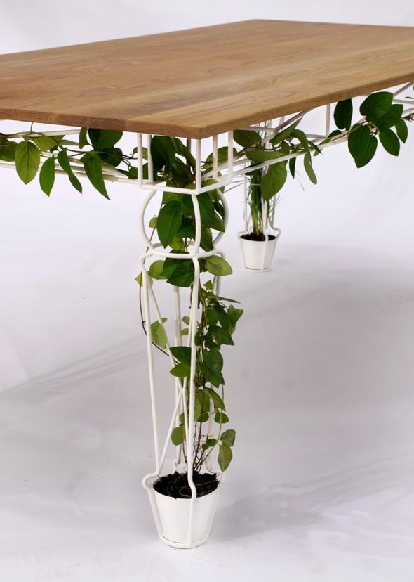 Огород под столом. Изображение № 4.