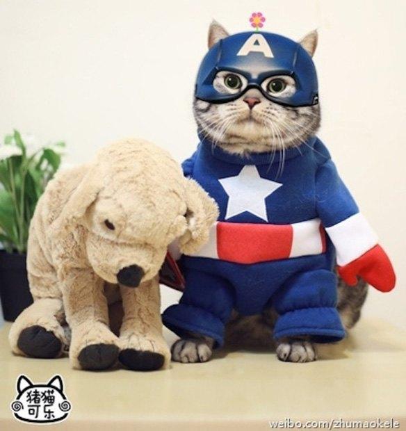 Котик косплеит супергероев. Изображение № 6.