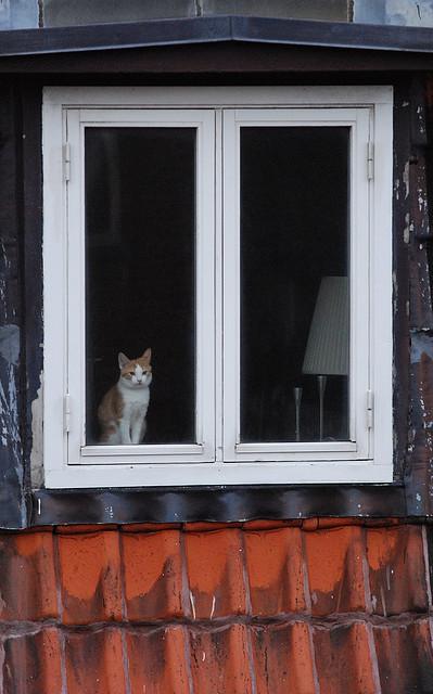 Cat. Window. Изображение № 41.