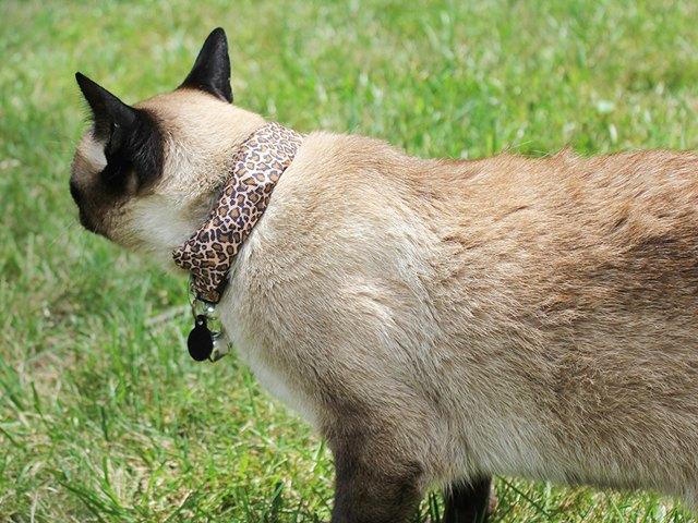 Кот Коко в ошейнике WarKitteh. Изображение № 2.