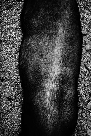 Андерш Петершен - живая легенда шведской фотографии. Изображение № 20.