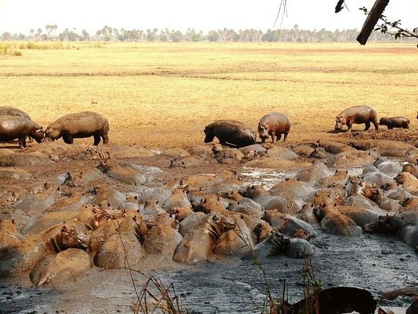 Бегемотово царство. Танзания. Изображение № 5.