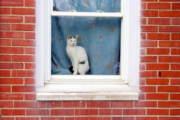 Cat. Window. Изображение № 4.