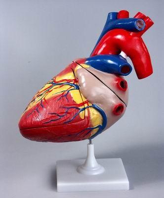 Синдром разбитого сердца. Изображение № 1.