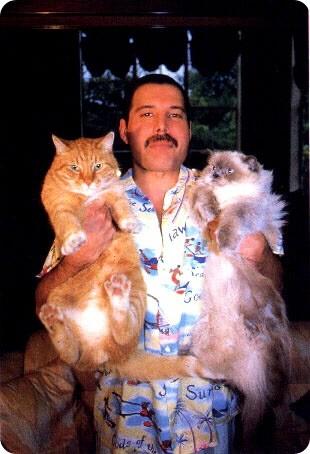 Коты и их знаменитости. Изображение № 21.