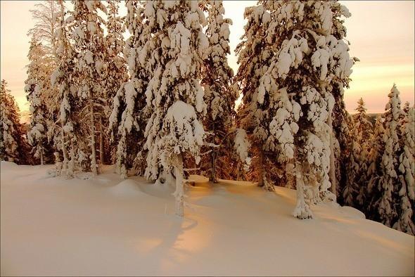 Изображение 9. Выходные в шведском лесу.. Изображение № 9.